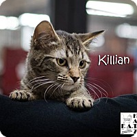 Adopt A Pet :: Killian - Albuquerque, NM
