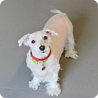 Adopt A Pet :: Mademoiselle - Smyrna, GA