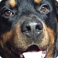 Adopt A Pet :: Buzz - Frederick, PA