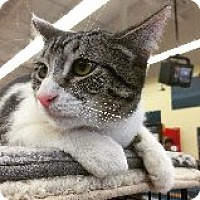 Adopt A Pet :: Smidge - Chandler, AZ