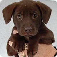 Adopt A Pet :: Rogue (5 lb) - SUSSEX, NJ