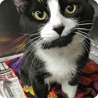 Adopt A Pet :: Mikey - Oswego, IL
