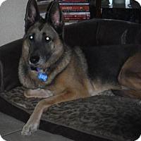 Adopt A Pet :: NALA - SAN ANTONIO, TX