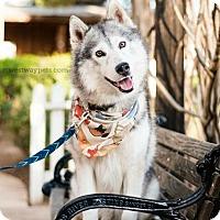 Adopt A Pet :: Liam - El Cajon, CA
