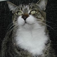 Adopt A Pet :: Susie - Bonita Springs, FL