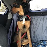 Adopt A Pet :: Chas - Newport, MI