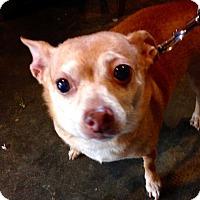 Adopt A Pet :: BAMBI - Coudersport, PA