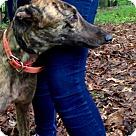 Adopt A Pet :: JA's Lucy