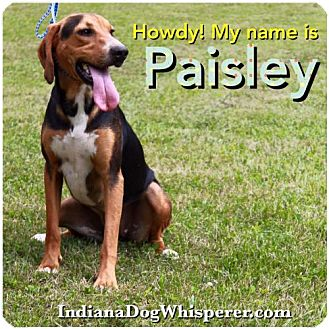 Hound (Unknown Type) Mix Dog for adoption in Poland, Indiana - Paisley