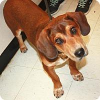 Adopt A Pet :: Charles - Sparta, NJ