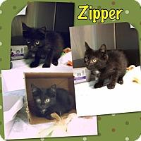 Adopt A Pet :: Zipper - Elmhurst, NY