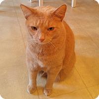 Adopt A Pet :: CatapultCP - Carlisle, PA