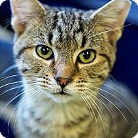 Adopt A Pet :: Hodor - Indianapolis, IN