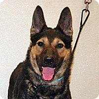 Adopt A Pet :: Benjamin - Wildomar, CA