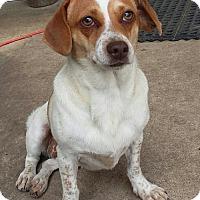 Adopt A Pet :: Dog ID# 1753 - Lake City, MI