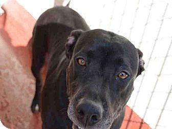 Labrador Retriever Mix Dog for adoption in Newnan City, Georgia - Bertha