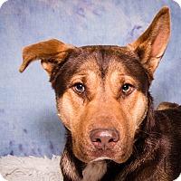 Adopt A Pet :: Sparky - Divide, CO