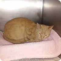 Adopt A Pet :: butterscotch - Columbia, KY