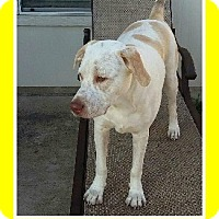 Adopt A Pet :: Tucker - Austin, TX