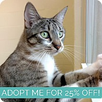 Adopt A Pet :: Quincy - Sarasota, FL