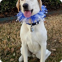 Adopt A Pet :: Carson - Coppell, TX