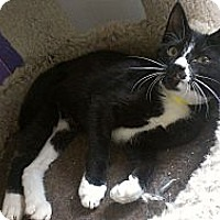 Adopt A Pet :: Elijah Wood - Richboro, PA