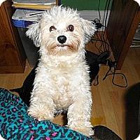 Adopt A Pet :: Cherry - Hamilton, ON