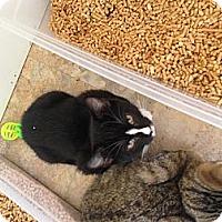 Adopt A Pet :: Streak - Aiken, SC