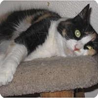 Adopt A Pet :: CaliCooke - Huffman, TX