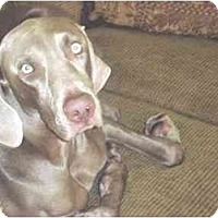 Adopt A Pet :: Memphis  **ADOPTED** - Eustis, FL