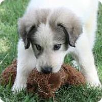 Adopt A Pet :: Watson - Austin, TX