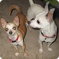 Adopt A Pet :: Rocket and Bullit - Orange Park, FL