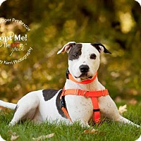 Adopt A Pet :: Lucie - Medina, OH