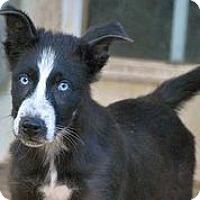Adopt A Pet :: Marcus Mariota - Austin, TX