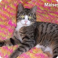 Adopt A Pet :: Maisey - Bentonville, AR