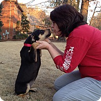 Adopt A Pet :: Abby - Homewood, AL