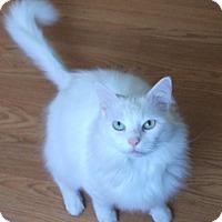 Adopt A Pet :: Charley - Colmar, PA