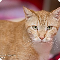 Adopt A Pet :: Eddie - Fountain Hills, AZ