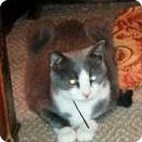 Adopt A Pet :: Michael - Flushing, NY