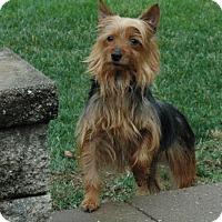 Adopt A Pet :: Ladybug COURTESY POST - Doylestown, PA