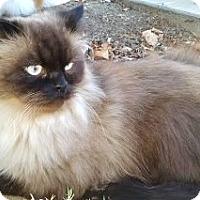 Adopt A Pet :: Mr. Big Boy - Davis, CA