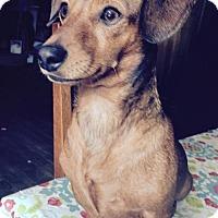 Adopt A Pet :: Happy - Buffalo, NY