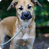 Adopt A Pet :: Presley - Longview, TX