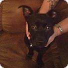 Adopt A Pet :: Ziva