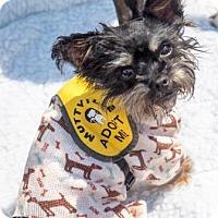 Adopt A Pet :: Watson - San Francisco, CA