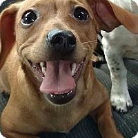 Adopt A Pet :: Penny - South Mills, NC