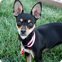 Adopt A Pet :: Ophelia - 7 lbs! - Los Angeles, CA