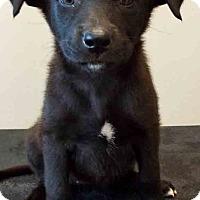Adopt A Pet :: ADOPTED!!!   Annalisa - Shorewood, IL
