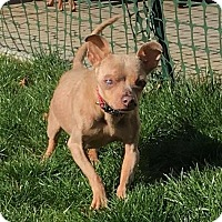 Adopt A Pet :: Pepe #3 - Pittsburgh, PA