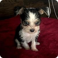 Adopt A Pet :: Reggie - Los Angeles, CA